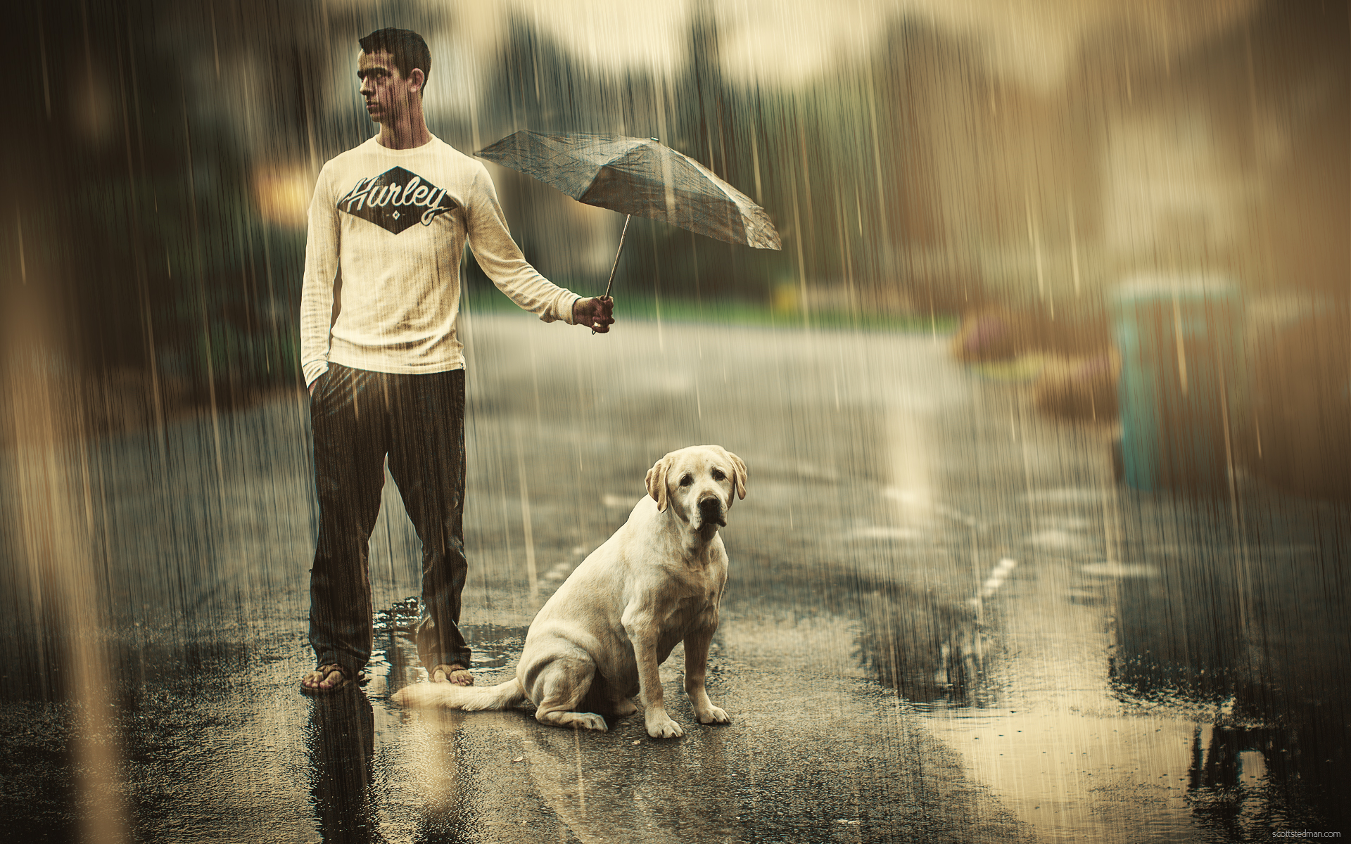 Quotes About Raining Cats And Dogs
